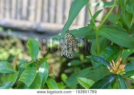Beautiful butterfly outoodrs in the park of tropical Bali island. Exotic butterfly.