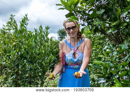 Woman holding mandarin orange fruit in the garden. Mandarin plantation, tropical Bali island.