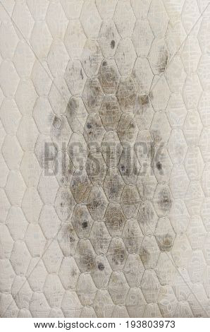 Closeup Of Mold On Mattress, Health Problems.