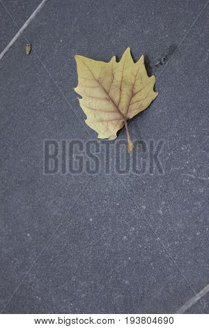 leaf lying on the stone ground of the street