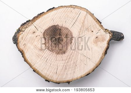 highly detailed apple tree woodcut isolated on white