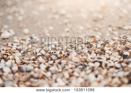Seashore background with seashells. Natural textured surface, selective focus