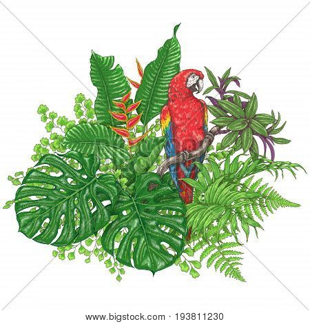 Hand drawn branches and leaves of tropical plants. Vivid floral bunch and bird isolated on white. Red Macaw sitting on liana branch. Vector sketch.