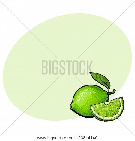 Whole and slice of unpeeled ripe green lime, sketch style vector illustration with space for text. Hand drawn whole and cut juicy lime fruit with fresh green leaf