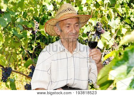 Happy Senior viticulturist holds wineglass with wine