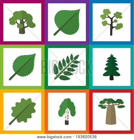 Flat Icon Bio Set Of Linden, Alder, Hickory And Other Vector Objects. Also Includes Alder, Foliage, Hickory Elements.