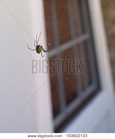 HDR Black Widow spider in front of a widow