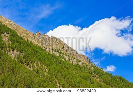 a white cloud seems to come out from the side of a mountain covered with pine treeson a sunny day in the national park of Great Paradise in PiedmontItaly