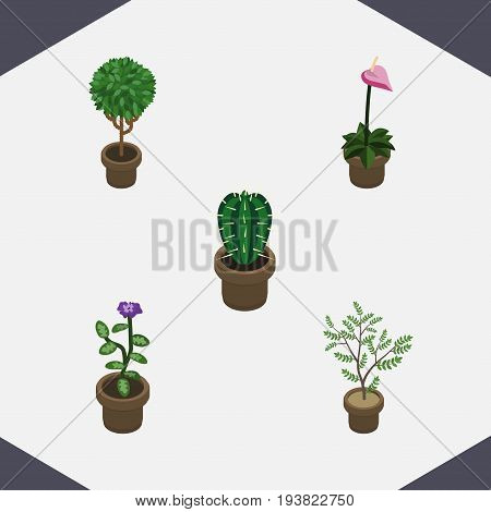 Isometric Flower Set Of Fern, Grower, Peyote And Other Vector Objects. Also Includes Pot, Flower, Flowerpot Elements.