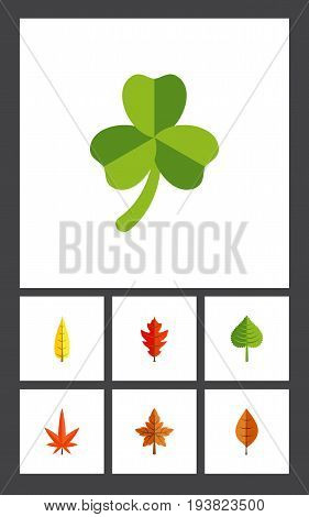 Flat Icon Maple Set Of Alder, Foliage, Maple And Other Vector Objects. Also Includes Maple, Aspen, Foliage Elements.
