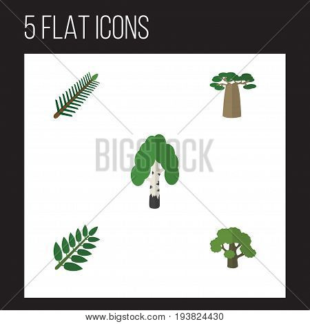 Flat Icon Ecology Set Of Baobab, Acacia Leaf, Tree And Other Vector Objects. Also Includes Rosemary, Forest, Leaf Elements.