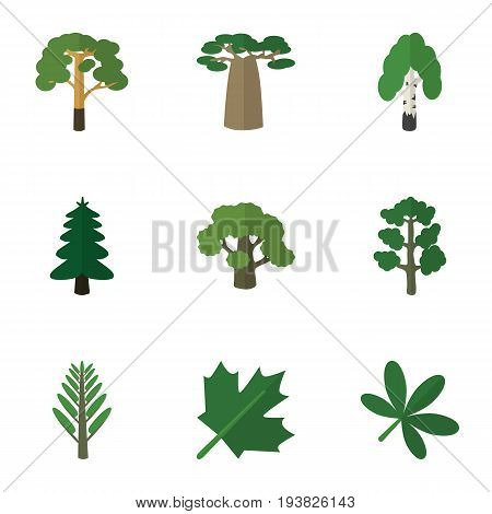 Flat Icon Natural Set Of Jungle, Park, Baobab And Other Vector Objects. Also Includes Birch, Oaken, Wood Elements.