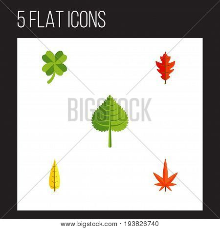 Flat Icon Foliage Set Of Frond, Hickory, Aspen And Other Vector Objects. Also Includes Maple, Foliage, Hickory Elements.