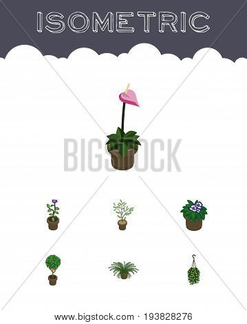Isometric Houseplant Set Of Grower, Blossom, Flower And Other Vector Objects. Also Includes Flower, Blossom, Flowerpot Elements.