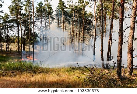 Forest fire. Using firebreak for stoping wildfire