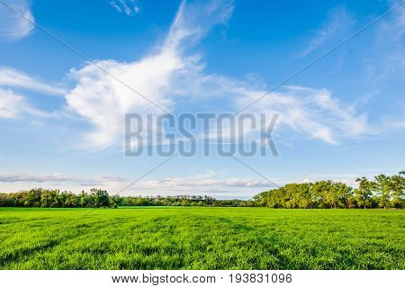 Green fields and blue sky at Ukraine