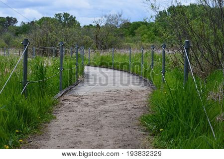 A boardwalk in the wetland during summer