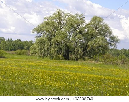 Green meadows and beautiful trees in the spring.