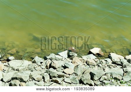 Shore rock stones and dirty green Danube river. River pollution.