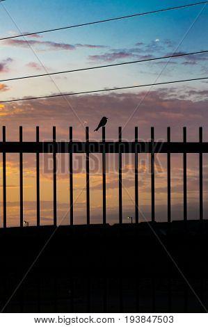 Sunset Scene Small Bird Over Fence