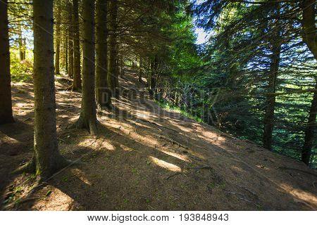 Footpath Around The Lake Pavin In Auvergne