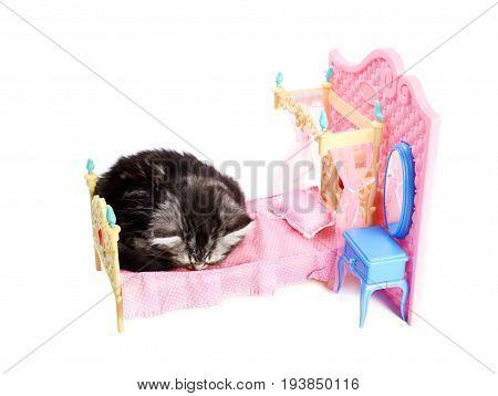 Beautiful gray kitten sleeping on pink doll bed