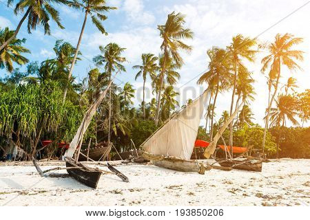Row of sailing boats with masts sitting at ocean shore, bright blue sky and palms