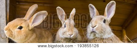 rabbits in a hutch - close up
