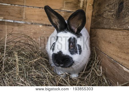 a rabbit in a hutch close up