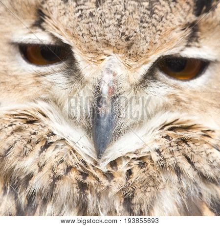 portrait of an owl An animal in a park on nature. A photo