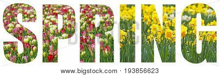 spring flowers and a text spring -  on a white