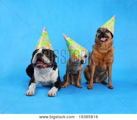 three dogs at a birthday celebration with hats on poster