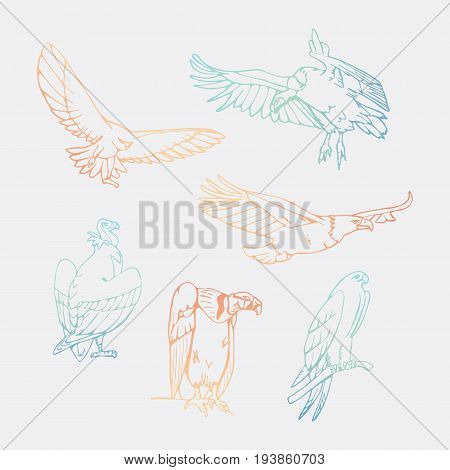 Birds of prey set. Bird engraved style emblem. Hand drawn style. Linocut, stencil vector art. Black and white, minimal.