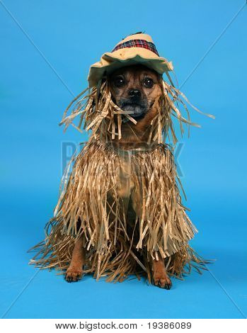 a dog dressed up in a scarecrow costume poster