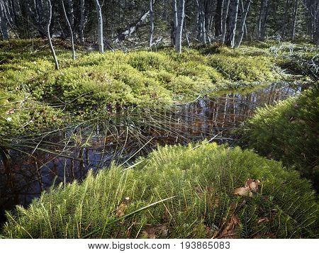 landscape peat bog peatbog - nature par Sumava