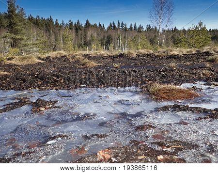 peat bog; peatbog landscape Sumava Crech republic