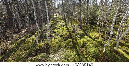 peat bog; peatbog landscape Sumava Czech republic