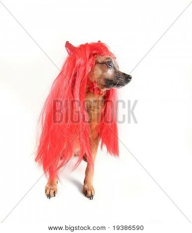 a cute dog dressed up as a devil poster