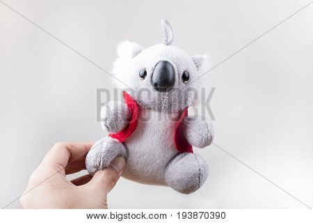 Hand holding koala soft toys on a plain background