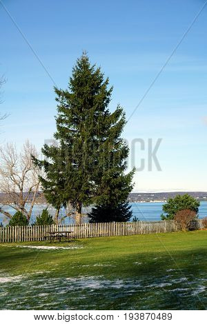A pine tree stands at the edge of Sunset Park in Petoskey, Michigan, during November.