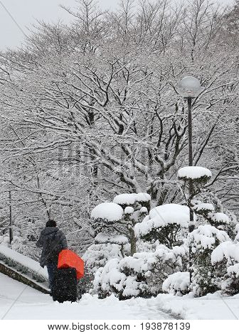 person pulling suitcase and bright orange bag down a snow-covered road past a garden and wooded area in Japan after a snowfall.