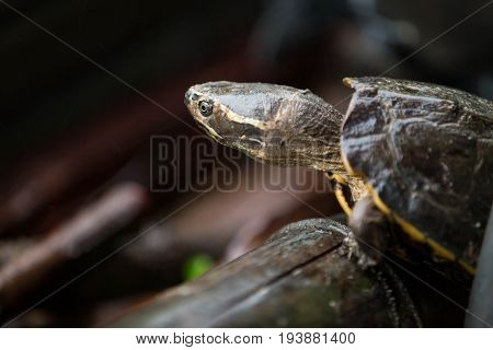 The turtle live in the natural whit rain
