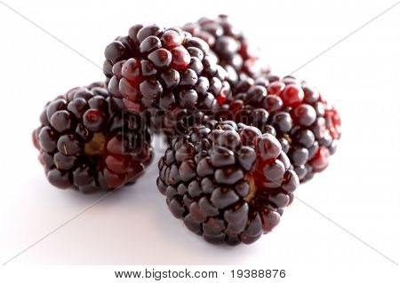 a few blackberries over a white background