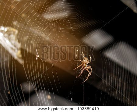 Spider weaves a web for hunting prey.