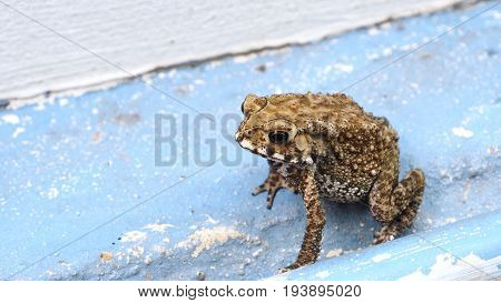 Toad is amphibian his pattern is nice art abstract Background is cement floor blue color.
