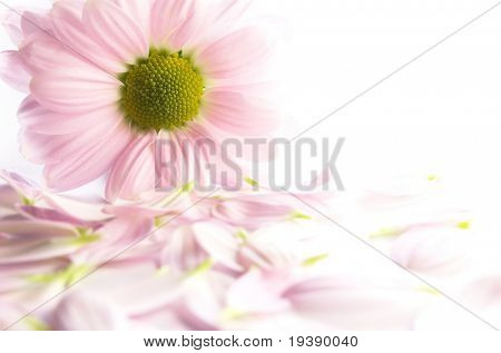 Pink flower with petals