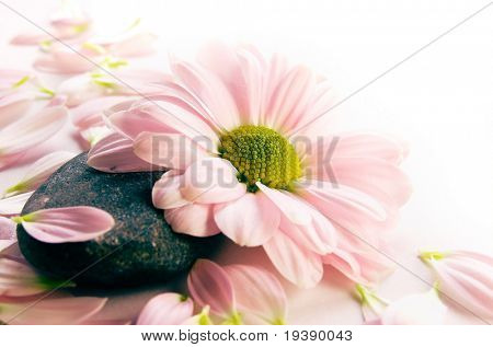 Flower and petals on a stone