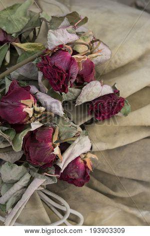 few dried red roses lying on a dark beige dirty cloth background
