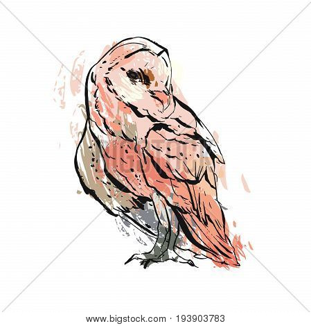 Hand drawn vector abstract graphic owl illustration in pastel colors isolated on white background. Boho painting print design. Zoo and wildlife bird illustration.