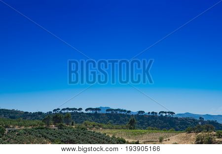 Tree Line, Andalucia, Spain